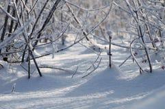 замерли bushes, котор Стоковое Фото