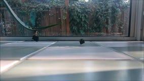 Замедленное движение падая черные зажимы видеоматериал