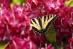 2 замкнутая бабочка на цветках Стоковое Изображение