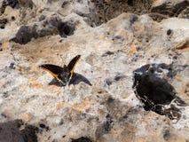 2-замкнутая бабочка паши на скалистой земле Стоковые Фото