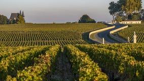 Замоки des маршрута, виноградник в Medoc, amous имуществе вина вина Бордо стоковые изображения rf