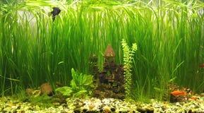 Замок в аквариуме Стоковые Фотографии RF