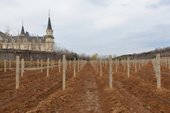Замок и виноградник в сельской местности Стоковое Изображение RF