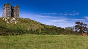 Замок и корова, Северная Ирландия Стоковое Изображение