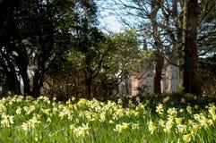 Замок и daffodils Brodie стоковые фотографии rf
