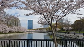 Замок Осаки Стоковые Фото