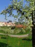 замок цветя готский взгляд валов prague Стоковое Изображение RF