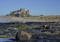 Замок Banburgh - взгляд от Норт-Сайд Стоковая Фотография RF