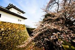 замок hikone j sakura цветеня Стоковое Изображение RF