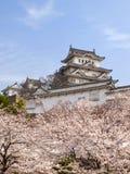 Замок Himeji в сезоне цветения вишни Стоковое Изображение RF
