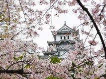 замок himeji sakura Стоковая Фотография