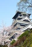 Замок Kumamoto с Сакурой Стоковые Изображения