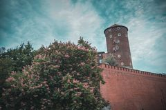 Замок Wawel в Краков стоковые фото