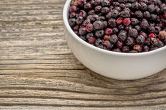 Замораживание - высушенные ekderberries стоковые изображения
