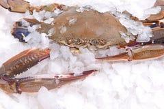 Замораживание краба в льде стоковая фотография rf