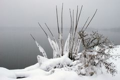 Замораживание природ глубоко - стоковые фото