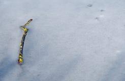 Замороженная ветвь дерева стоковые изображения