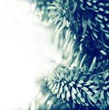 Замороженная ветвь рождественской елки стоковое фото rf