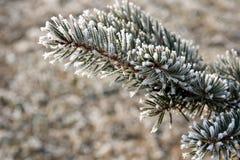 замороженная ветвь Стоковая Фотография