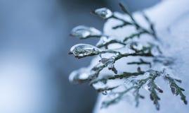 Замороженная вода на ветви ели Стоковое Изображение