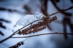 Замороженная вода на ветви Стоковая Фотография RF