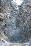 Замороженная дорога в лесе Фонтенбло стоковое изображение rf