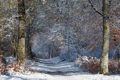 Замороженная дорога в лесе Фонтенбло стоковые изображения
