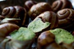 Замороженная еда улитки с маслом чеснока Стоковое Изображение RF