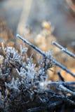 Замороженная жизнь растений пустыни Стоковые Изображения
