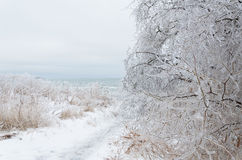 замороженная зима ландшафта стоковые изображения