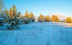замороженная зима воды захода солнца ландшафта травы Стоковое фото RF