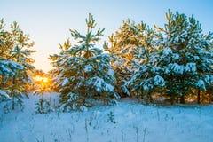 замороженная зима воды захода солнца ландшафта травы Стоковые Изображения RF