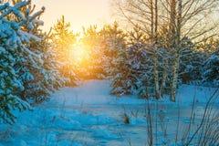 замороженная зима воды захода солнца ландшафта травы Стоковая Фотография RF