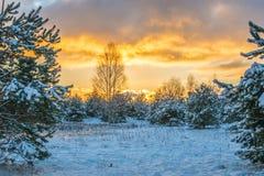 замороженная зима воды захода солнца ландшафта травы Стоковые Изображения