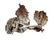 замороженная зима листьев Стоковое фото RF