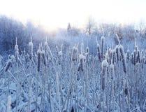 замороженная зима травы Стоковая Фотография RF