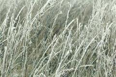 замороженная зима травы Стоковые Изображения RF