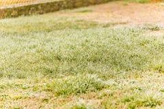 замороженная зима травы Стоковые Изображения