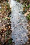 Замороженная лужица воды в лесе осени стоковое фото