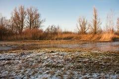 замороженная нидерландская топь Стоковая Фотография