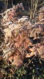 Замороженная осень Стоковое Фото