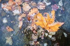 Замороженная осень Стоковые Изображения RF