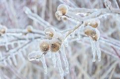 Замороженная предпосылка зимы ледистых деревьев Стоковое Изображение RF