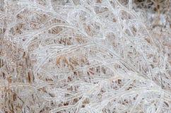 Замороженная предпосылка зимы Стоковая Фотография