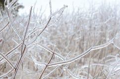 Замороженная предпосылка зимы Стоковая Фотография RF