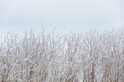 Замороженная предпосылка зимы Стоковые Фотографии RF