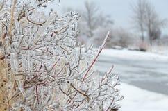 Замороженная предпосылка зимы Стоковое Изображение
