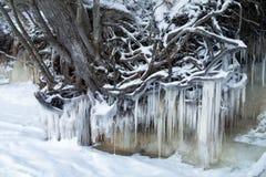 Замороженная природа Стоковое Изображение RF