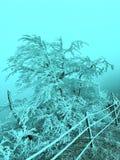 замороженная природа Стоковая Фотография RF