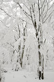 Замороженная пуща Стоковая Фотография